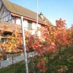 Unser Rebhüsli im Herbst.